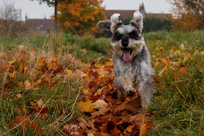 Dog friendly walking locations in Haxby, Wigginton and Strensall